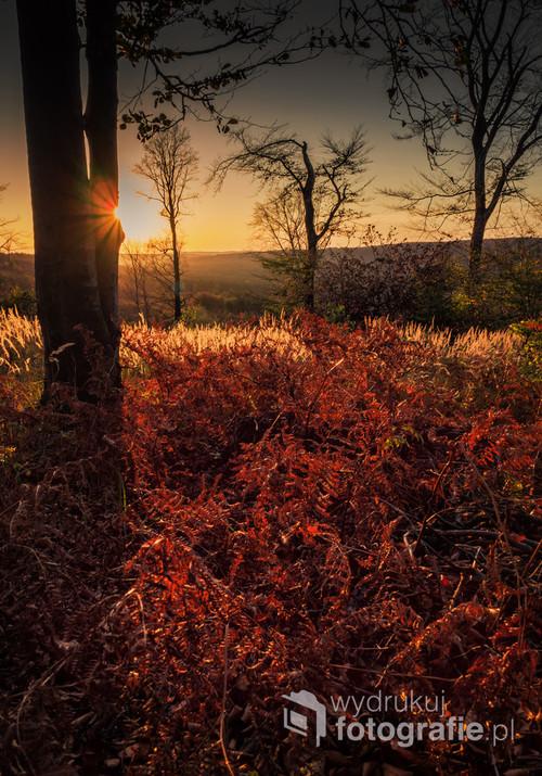 Zachód słońca w jesiennym lesie.