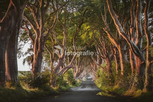 The Dark Hedges - Irlandia Północna Sierpień 2016