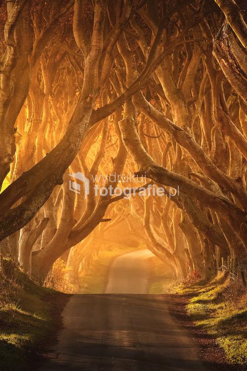 The Dark Hedges - Irlandia Północna 2010 Jedna z najpiękniejszych aleji drzew w Europie i na Świecie. Aleje tworzą 300-letnie buki. Praca wielokrotnie nagradzana m.in: Landscape Photographer of The Year 2011 UK – Wyróżnienie. Gold Award Winner- International Aperture Awards 2011 Australia. PSA Honorable Mention, Bronze Medal in FOTOFERIA INTERNATIONAL EXHIBITION 2011 Pokochaj Fotografię – Wyróżnienie specjalne.