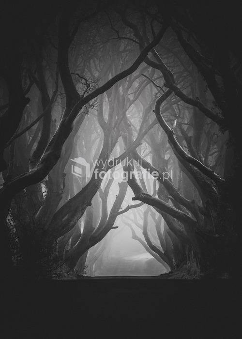 The Dark Hedges - Irlandia Północna Styczeń 2011