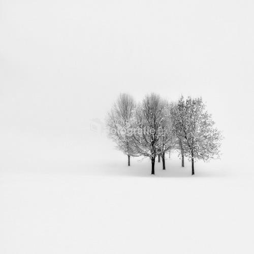 Fotografia wykonana podczas śnieżycy. Zima stulecia na Wyspach Brytyjskich Limavady - Irlandia Północna Grudzień 2010 Finalista konkursu Digital Camera ''Winter is My Love'' 2011 – Wyróżnienie.