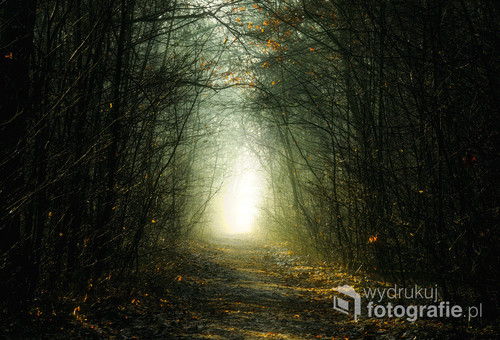 Fotografia przedstawia ścieżkę w lesie w okolicy Łomży - w Lesie Jednaczewskim. Tego poranka, powietrze było nieco mgliste, a słońce już wstało i oświetlało las.