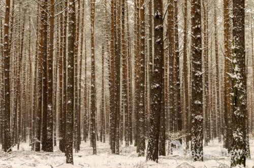 Wspomnienie zimy w 2018 roku (wtedy jeszcze był śnieg).