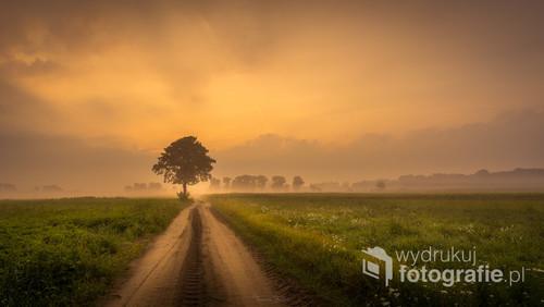 Polna droga o świcie.