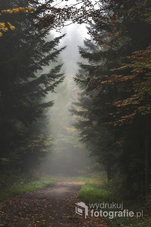 Mglisty poranek w jesiennym lesie.