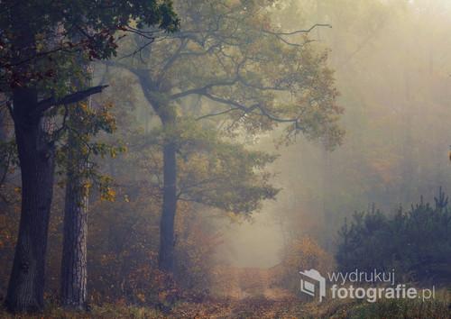 Jesienny poranek w puszczy pilickiej