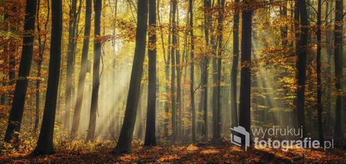 Jesienny pokaz laserowy.  Zdjęcie jest w dużym formacie umożliwiający wydruk wielkoformatowy, np. na fototapetę.