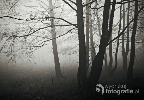 Mgły mają w sobie coś tajemniczego, coś, co przyciąga, intryguje i każe natychmiast łapać za aparat...