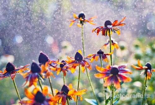 Ogród za każdym razem inną, piękną bajkę opowiada...