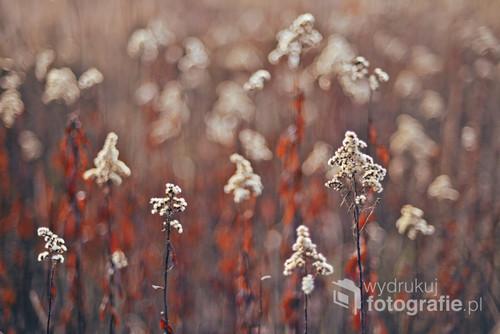 Jesień 2018 na nadwarciańskich łąkach - piękna, kolorowa i niezwykle fotogeniczna.