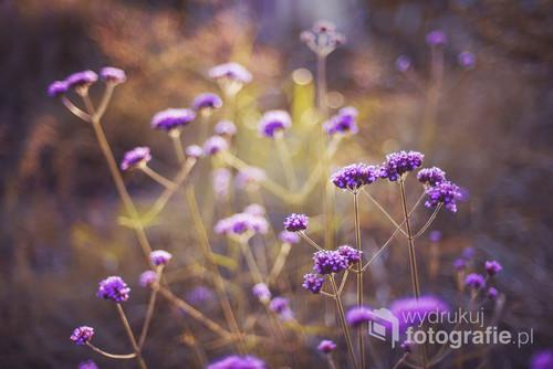 Przydomowy ogródek - moje źródło inspiracji.