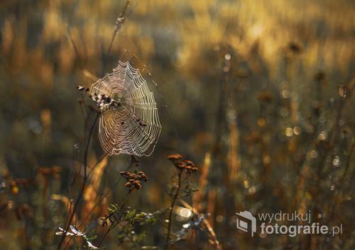 Poranna koronka w barwach jesieni, diamentowa ozdoba usypiającej łąki... Jeden z moich ukochanych foto-tematów.