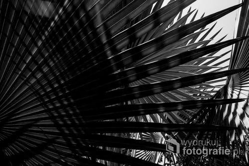 Tajlandia, liście palm.