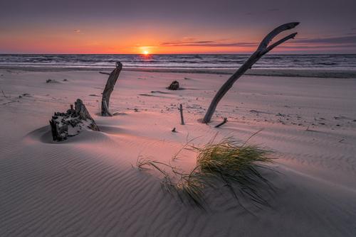 """Zatopiony las koło Czołpina, który został odkryty według źródeł z internetu w 2016 roku przypadkiem przez rybaków. To wtedy intensywny sztorm na Bałtyku odsłonił pozostałości po pradawnej bukowo –dębowej puszczy sprzed ok 3 tyś lat. . """"Zatopiony Las"""" ponownie zostaje zasypywany przez niesiony z morzem piasek   i nie wiadomo, kiedy Bałtyk pochłonie w całości lub zasypie go piasek ."""