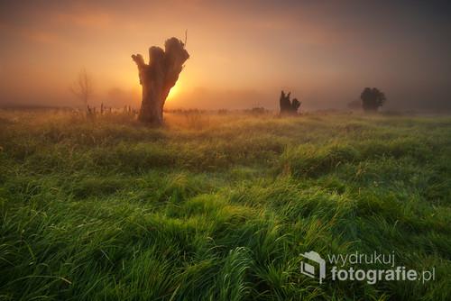 Fotografia wykonana podczas porannego pleneru na żuławskich łąkach w Raczkach Elbląskich.Magia świtu w tym miejscu to także obecność mgły,która bywa w tym miejscu często.