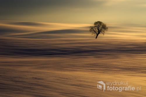 Na zdjęciu pomiędzy pofalowanymi polami widzimy bardzo fajnie pochylonego,starego klona.Obraz został zrobiony za pomocą teleobiektywu z najwyższego miejsca na tym polu.Zdjęcie zajęło II miejsce w internetowym konkursie zdjęcie miesiąca w czasopiśmie Foto Kurier w styczniu 2016.Znajduje się także w galerii wysokiej(zdjecia wybitne) portalu fotoferia z bardzo wysokim poziomem zdjęć.