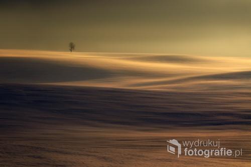 Kasztanowiec pośród pofalowanych zimowych pól. Zdjęcie znajduje się w galerii wysokiej, zdjęcia wybitne na portalu fotoferia.