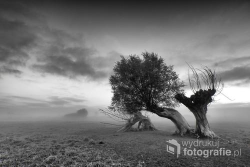 Fotografia została wykonana w najniższym punkcie Polski,tzw depresji w miejscowości Raczki Elbląskie.Najniższy punkt w Polsce wynosi 1,8 m.p.p.m i z tego powodu mgły w tym miejscu są dosyć częste.Zdjęcie wykonano za pomocą aparaty Nikona D300s z obiektywem szerokokątnym Sigma 10-20.Zdjęcie zostało wybrane do pierwszej siódemki Najlepsze z Najlepszych w czasopiśmie Fotokurier 12/2017.