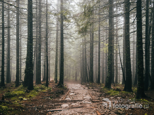 Tatrzański Park Narodowy /Im dalej w las, tym lepsze widoki.  Kolekcja: Wiosna 2019