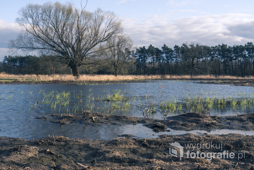 Zdjęcie ukazuje walkę młodych pędów traw o przetrwanie wśród zimnej wody.