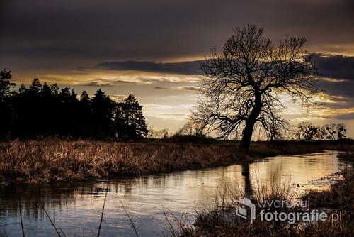 Samotne drzewo nad brzegiem rzeki.