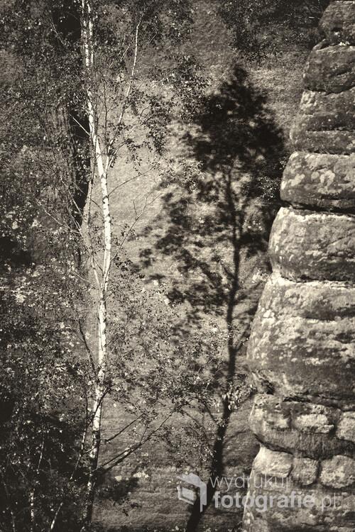 """Zdjęcie stanowi część zestawu 5-ciu fotografii zatytułowanego """"Tajemnice Sudetów (I, II, III, IV, V)"""". Zestaw można wyeksponować na ścianie w całości. Każda z fotografii wchodzących w skład zestawu może również samodzielnie dekorować wnętrze. Kolejną możliwością jest zawieszenie dwóch, trzech lub czterech fotografii. Zdjęcie zostało wykonane 12 sierpnia 2018r. około godziny 17.30 w paśmie górskim Broumovské stěny w Czechach zaliczanym do Gór Stołowych. Przedstawia ono brzozę przytuloną do skał środkowej części potężnego Kowarskiego Wąwozu (Kovářova rokle) osiągających wysokość do 100 metrów (widok z czerwonego szlaku turystycznego).  Zdjęcie było prezentowane na wystawie pokonkursowej konkursu"""