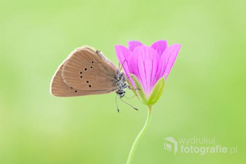 Zdjęcie przedstawia motyla na kwiatku,