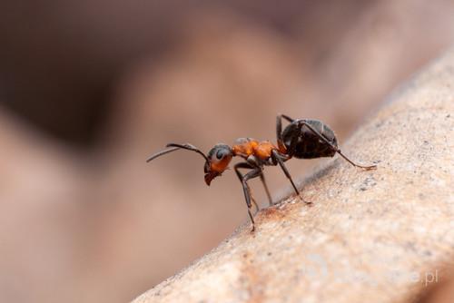 W świecie mrówek