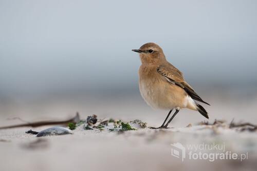 Autor: Krzysztof Stępień. Na plaży na Helgolandzie