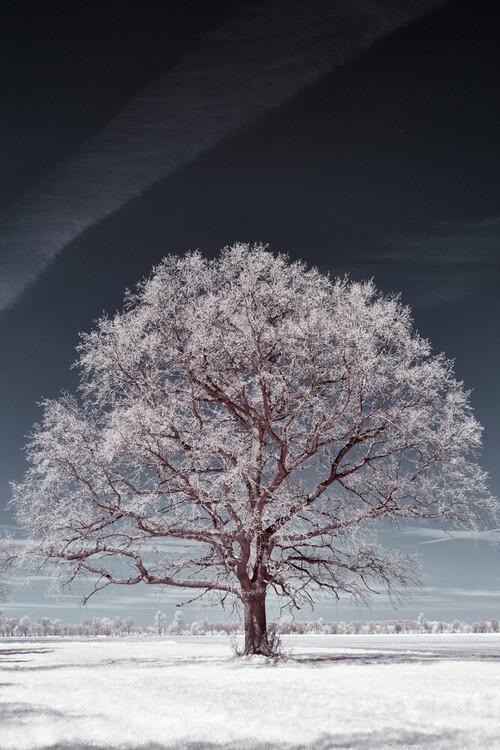 Fotografia została wykonana 11 maja 2021 roku na Nizinie Południowopodlaskiej przy pomocy aparatu przystosowanego do wykonywania zdjęć w podczerwieni. Około 150-cio letni, rozłożysty dąb góruje na łące pośród lasów i pól uprawnych. Drzewo znajdowało się w początkach wegetacji, stąd wszystkie jego części zawierające chlorofil (rozwijające się dopiero liście)