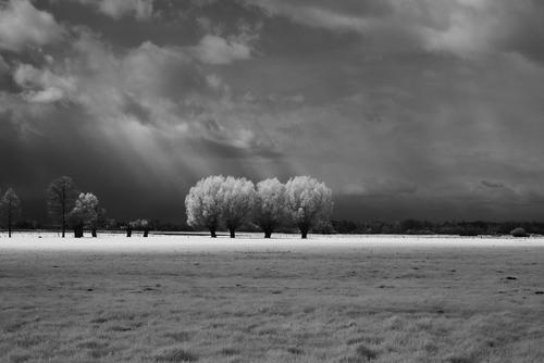 Te wierzby sfotografowałem 3 maja 2021 roku na Nizinie Południowopodlaskiej przy użyciu aparatu zmodyfikowanego do fotografii w podczerwieni. Tego zakresu promieniowania ludzkie oko prawie nie rejestruje. Front atmosferyczny, który przechodził, sprzyjał powstawaniu szybko przemieszczających się stratocumulusów. W chwili, gdy wykonywałem to zdjęcie, między chmurami pojawiło się słońce i dzięki temu chlorofil zawarty w liściach wierzb i roślinności dookoła