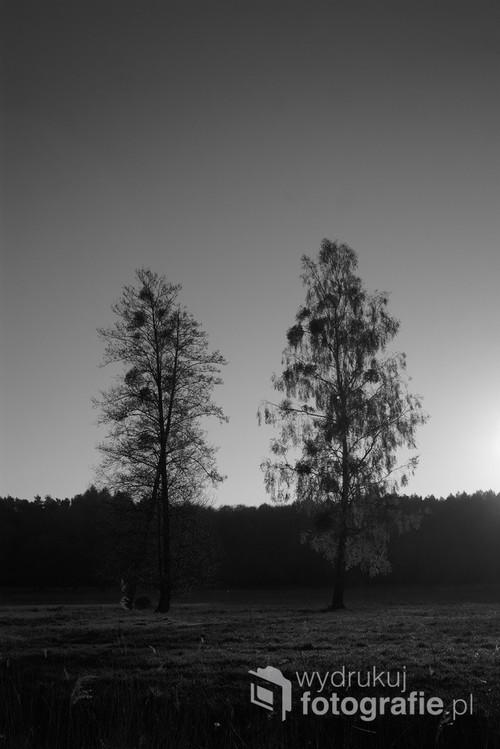 Zdjęcie wykonane o wschodzie słońca przy jeziorze Dzierżążno Wielkie. Latem pod drzewami pasą się krowy, a zimą zalega śnieg nawiany z nad jeziora.