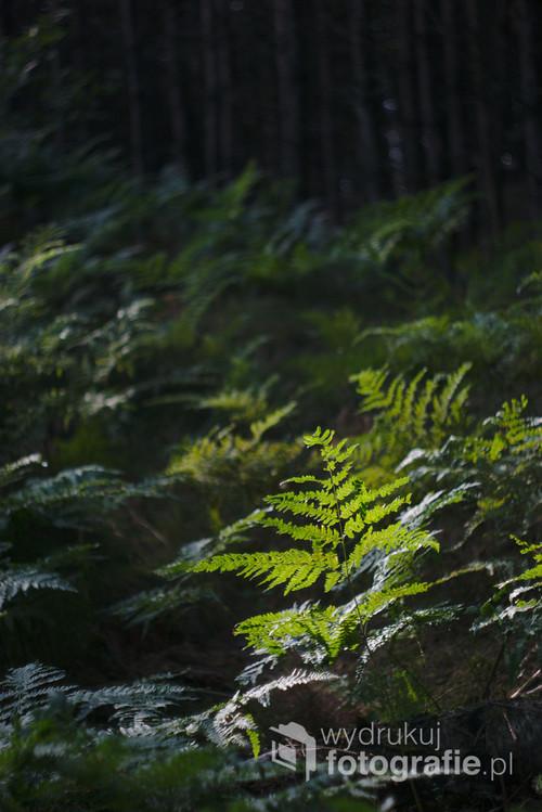 Zdjęcie zostało wykonane na terenie stawów hodowlanych, wcześnie rano gdy słońce było jeszcze nisko. Nagrodzone II miejscem w X Konkursie Fotograficznym im. Mariana Bakinowskiego
