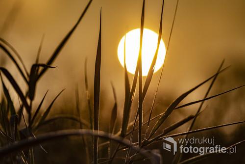 zdjęcie zostało wykonane pod czas wschodu słońca w listopadzie 2018 roku. zwykła trawka ale znajduje się to na terenie największego skupiska dębów w Europie.