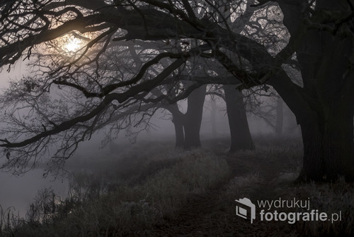 zdjęcie zostało wykonane na terenie Rogalina w Wielkopolsce. Jest to największe skupisko dębów, wiele z nich ma ponad 1000 lat. Liczba tych drzew, to ponad 2000 a wiele z nich ma ponad 1000 lat. Zdjęcie to zostało wykonane przy świetle księżyca.