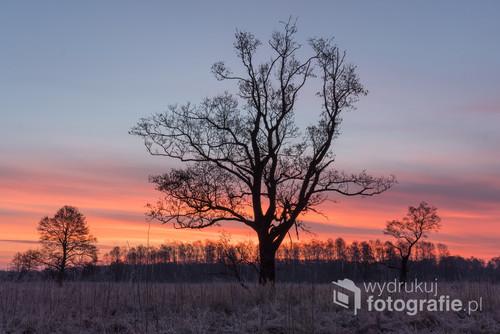 Drzewa na podmokłej łące przed wschodem słońca. W tle dramatycznie podświetlone chmury