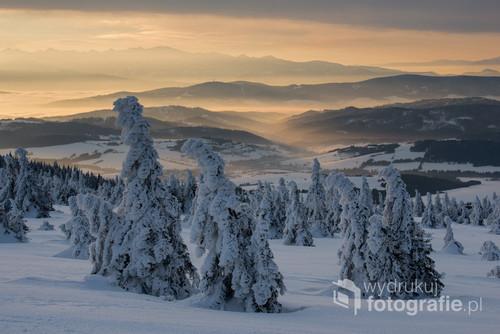 Świerki pokryte śniegiem i lodem oglądane o świcie. W tle Tatry oraz inne niższe pasma górskie.