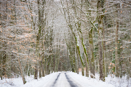 Boczna droga biegnąca przez las w zimowej aurze.