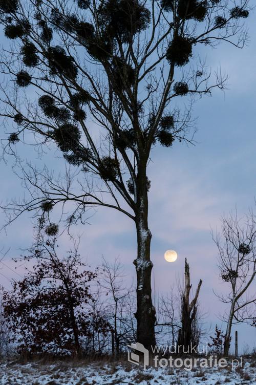 Zimowy wschód Księżyca na kilkanaście godzin przed pełnią.
