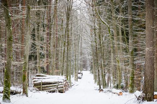 Leśna ścieżka w okolicach Taborza w Gminie Łukta.