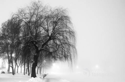 Pewnego zimowego wieczoru Ostróda była spowita gęstą mgłą. Nie inaczej było na nabrzeżu Jeziora Drwęckiego.