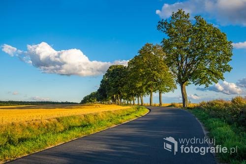 Boczna droga niedaleko Ostródy, biegnąca pomiędzy mazurskimi polami i lasami.