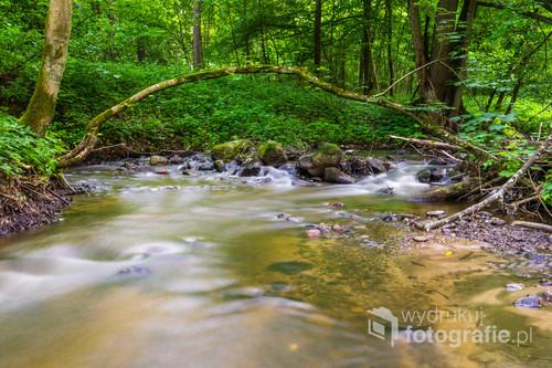 Rzeka Dylewka w letnim wydaniu. Zdjęcie wykonane niedaleko Durąga, w pobliżu ogromnego głazu - pomnika przyrody.