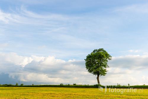 Samotne drzewo przy drodze niedaleko Ostródy.