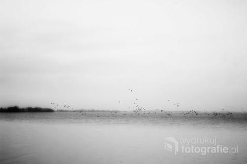 Wolne ptaki przykrywają taflę śląskiego jeziora.