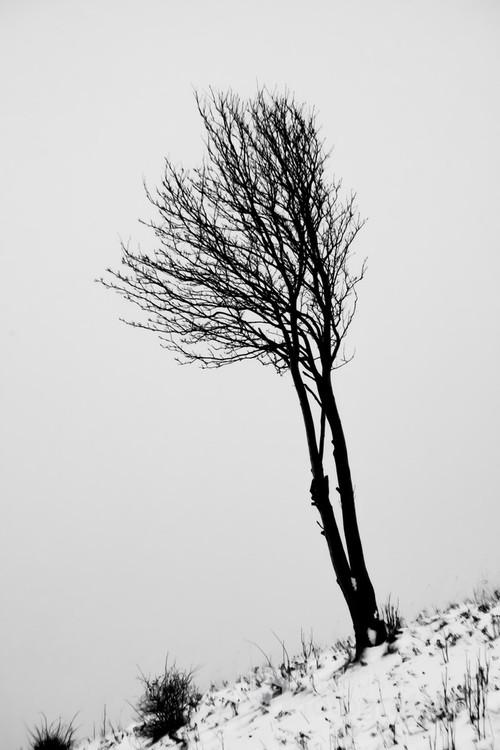Samotne drzewo pośród dolnośląskich gór.