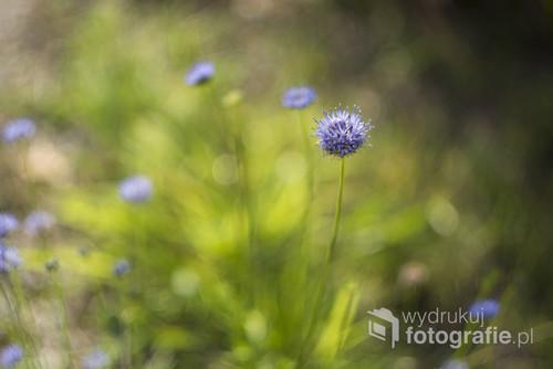 Niebieskie, drobne kwiaty przedstawione w dość abstrakcyjnym stylu