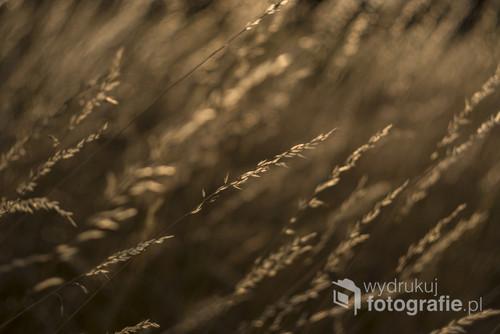 Nawet najmniejsze źdźbło trawy ma swój swoisty, nieopisany urok.
