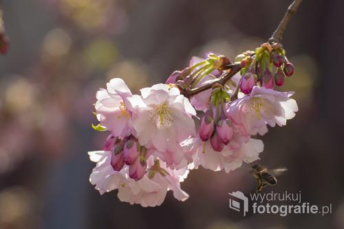 Wiosna w mojej okolicy