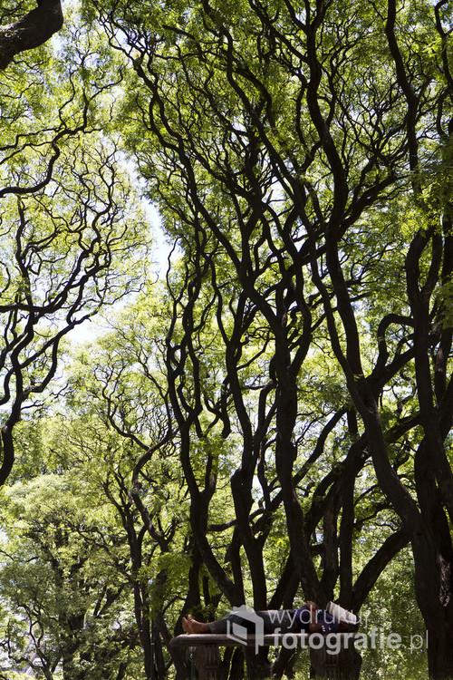 Buenos Aires stolica Argentyny. Gorące upalne popołudnie zmusza mieszkańców do szukania odpoczynku w cieniu drzew.